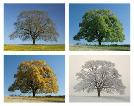 arbre saison