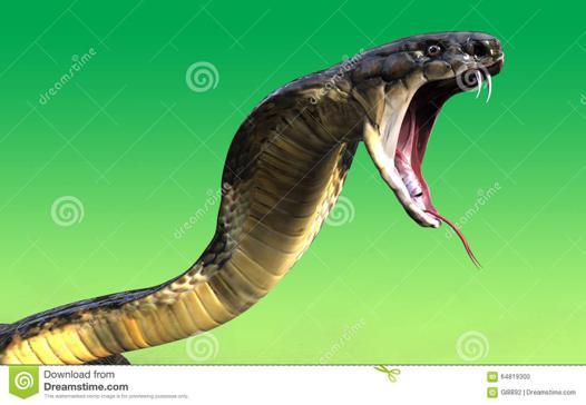 attaque de cobra