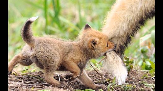 bébé des animaux