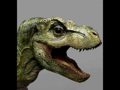 bebe t rex