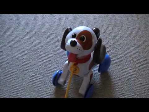 chien tomy