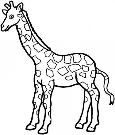 coloriage girafe