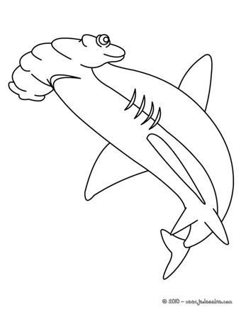 dessin de requin marteau