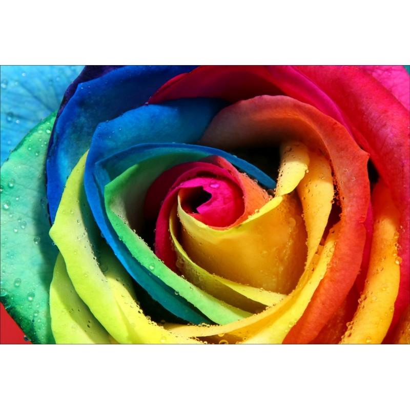 fleur multicolore