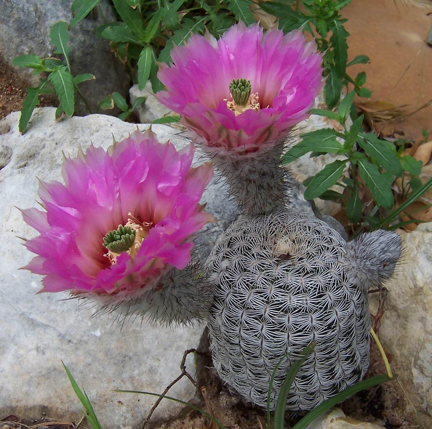 jb cactus