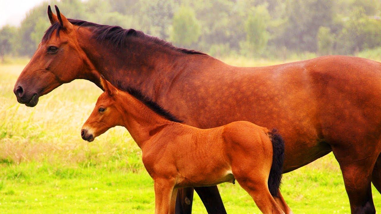 jeux de ferme de cheval