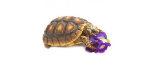 jouet pour tortue