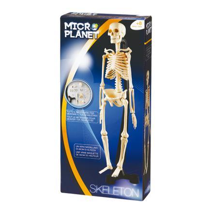jouet squelette