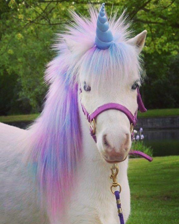 licorne cheval