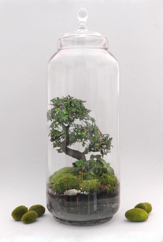 mini ecosysteme