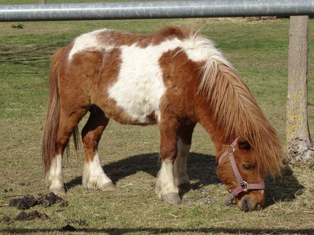 poney pie