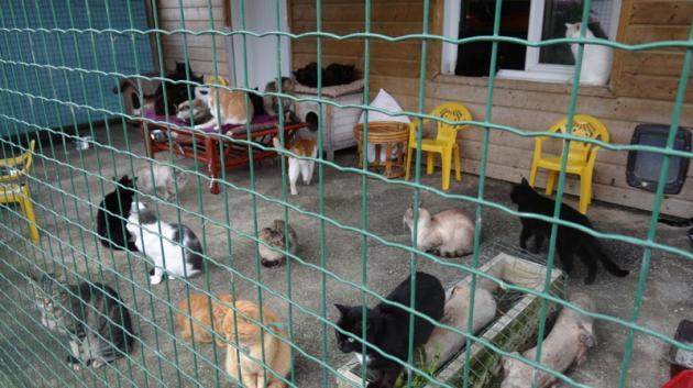 refuge d animaux