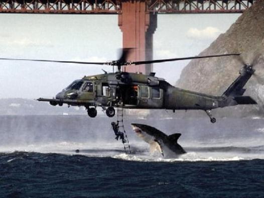 requin helicoptere