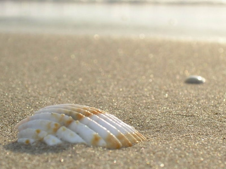 sable coquillage