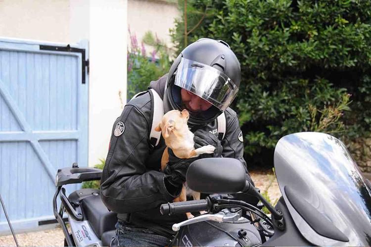 sac chien moto