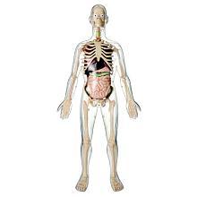 squelette jouet